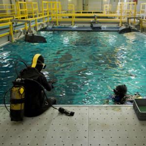 Mergulhadoras preparam-se para entrar no tanque grande