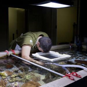 Manutenção dos viveiros de Coral - limpeza de areias do fundo